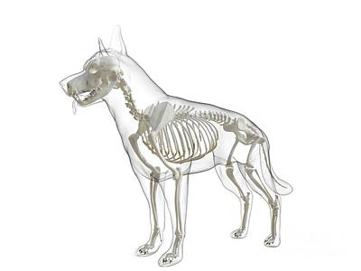 Designs Similar to Dog Skeleton