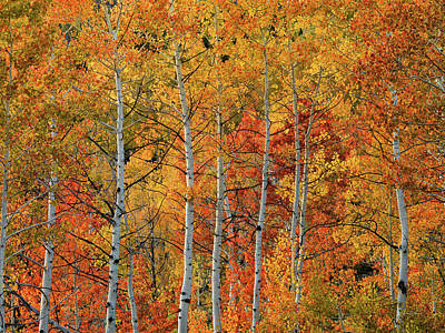 Designs Similar to Colorful Glow Of Autumn