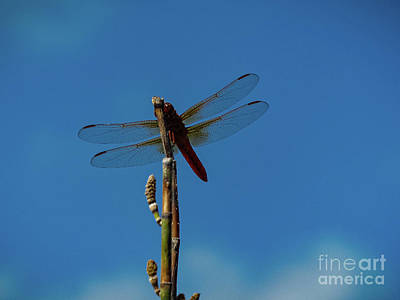 Designs Similar to Dragon Fly by Elijah Knight