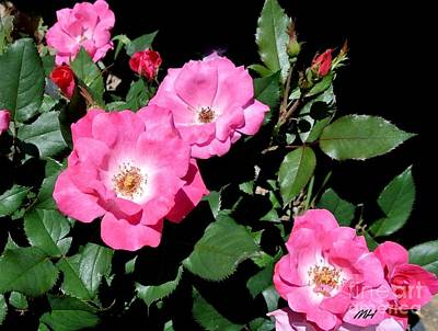 Designs Similar to Wild Roses And Buds