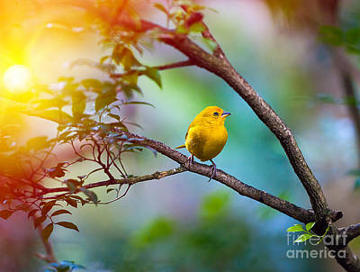 Designs Similar to Yellow Bird Sitting On A Branch