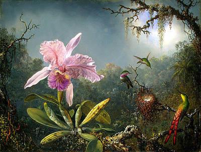 Cattleya Digital Art Prints