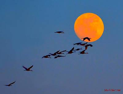 Migration Path Of Sandhill Cranes Art