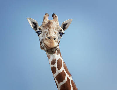 Designs Similar to Giraffe by Hollenderx2