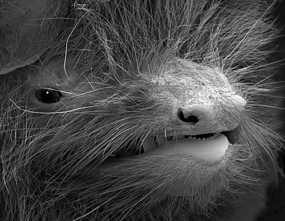 Designs Similar to Face Of A Pipistrelle Bat