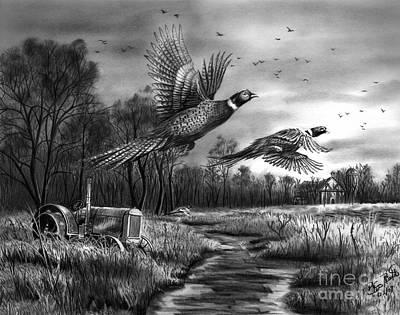 Pheasant Drawings Prints