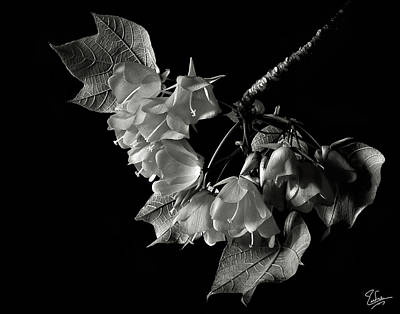 Designs Similar to Dombeya In Black And White