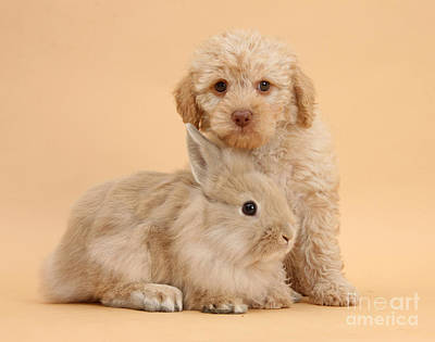 Designs Similar to Labradoodle Puppy With Rabbit