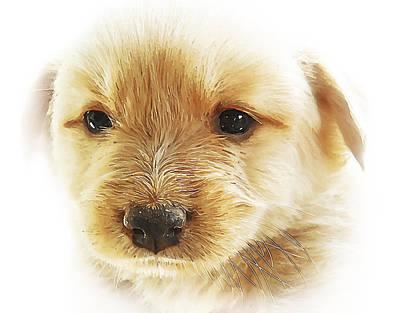 Watercolor Pet Portraits Photographs