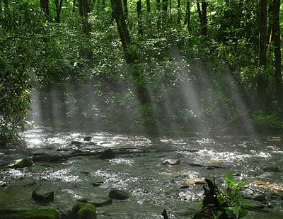Designs Similar to Rays Through The Trees