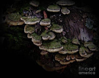 Fungi Digital Art Original Artwork