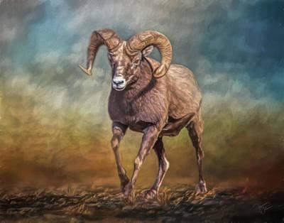 Rocky Mountain Bighorn Sheep Mixed Media