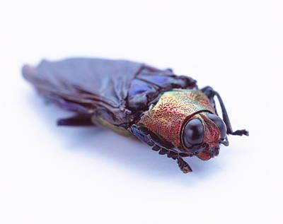 Designs Similar to Beetle