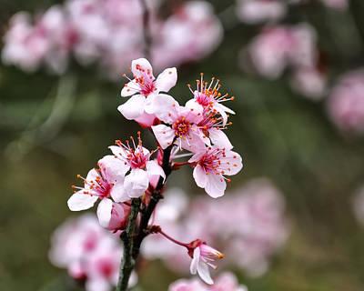 Cherry Blossom Digital Art Original Artwork