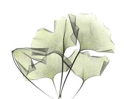 Designs Similar to Ginkgo Plant Leaves