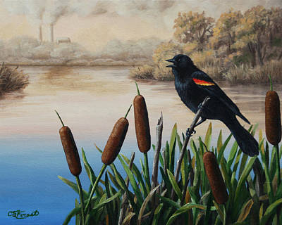 Red-winged Blackbird Art Prints