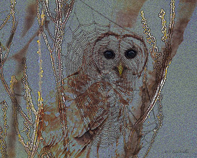 Barred Owl Digital Art Prints