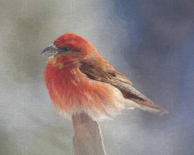 Crossbill Digital Art