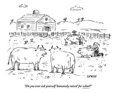 Farm Raised Pigs Art