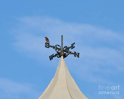 Bird On A Wind Vane Prints