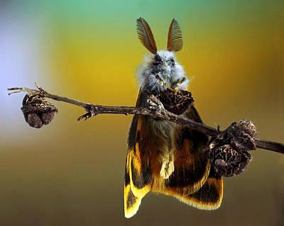 Moth Photographs