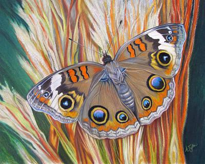 Buckeye Butterfly Art