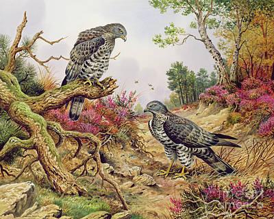 Buzzard Paintings