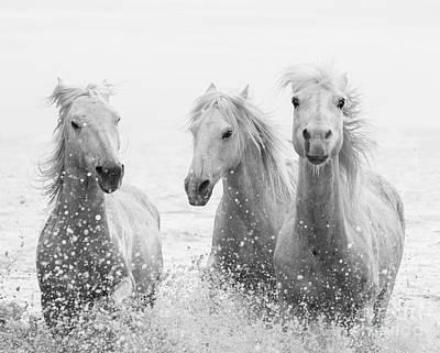 Designs Similar to Three White Horses Splashing