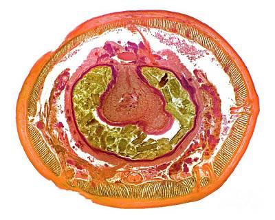 Designs Similar to Earthworm