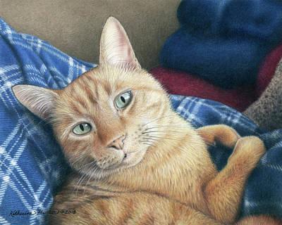 Orange Tabby Drawings