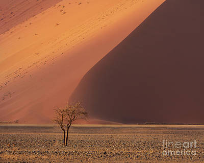 Designs Similar to Sossusvlei The Tree