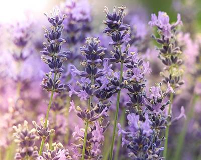 Designs Similar to Fresh Lavender by Susan Rydberg