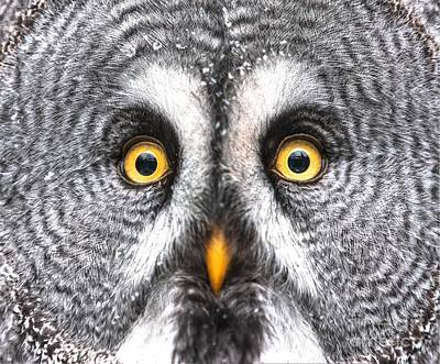 Designs Similar to Amazed Great Grey Owl Hdr