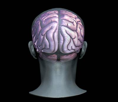 Designs Similar to Normal Brain by Zephyr