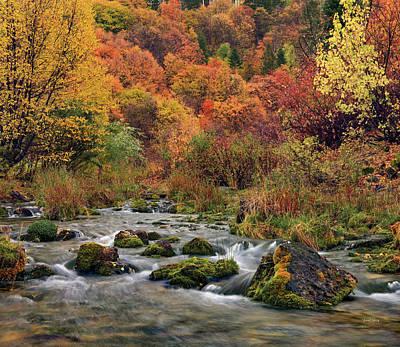 Designs Similar to Cub River Autumn 2
