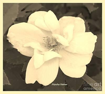 Designs Similar to Rose Sepia by Marsha Heiken