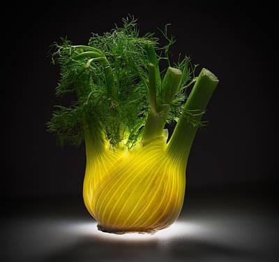 Designs Similar to Fennel by Wieteke De Kogel
