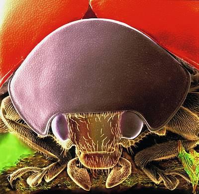 Designs Similar to Seven-spot Ladybird Head