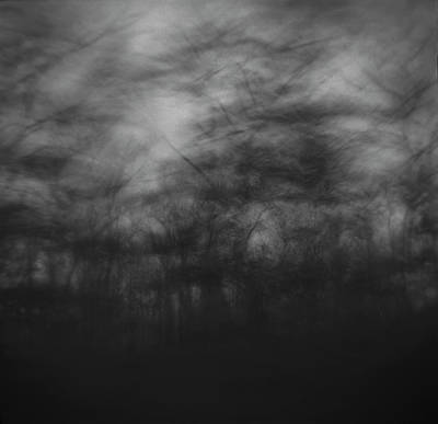 Designs Similar to Trees Sway In The Wind, Marthas