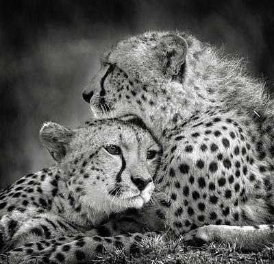 Designs Similar to Touching Cheetah Portrait