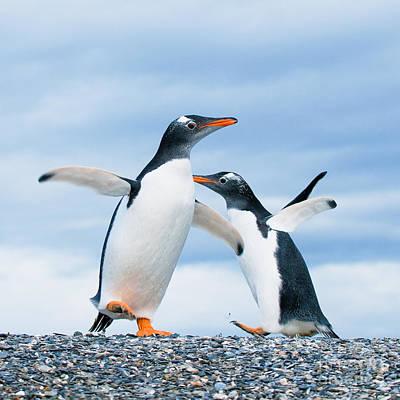 Penguin Art Prints