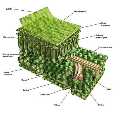 Designs Similar to Plant Leaf Structure