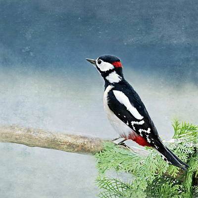 Woodpecker Mixed Media