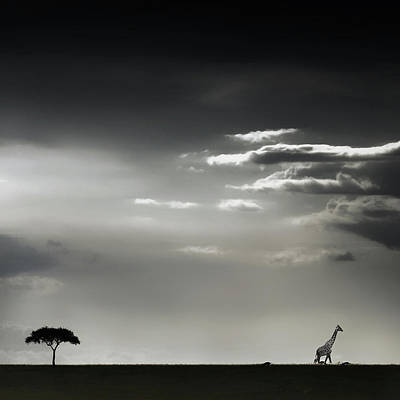 Masai Mara Photographs