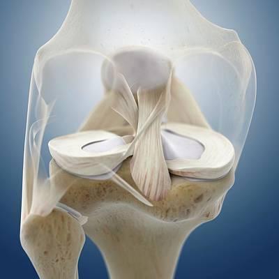 Designs Similar to Knee Anatomy