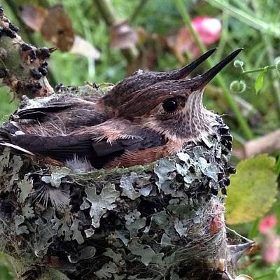 Nesting Art
