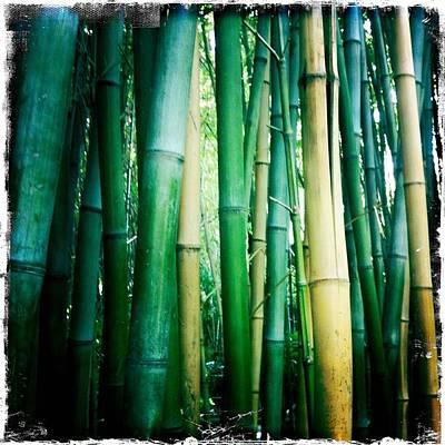 Designs Similar to Bamboo by Sarah Coppola