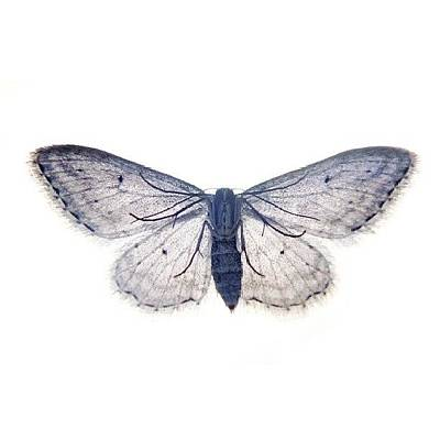 Designs Similar to Buttefly |