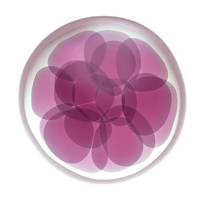 Designs Similar to Fertilised Egg Cell Dividing