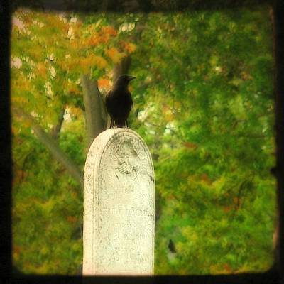 Crows On Tombstones Digital Art Prints